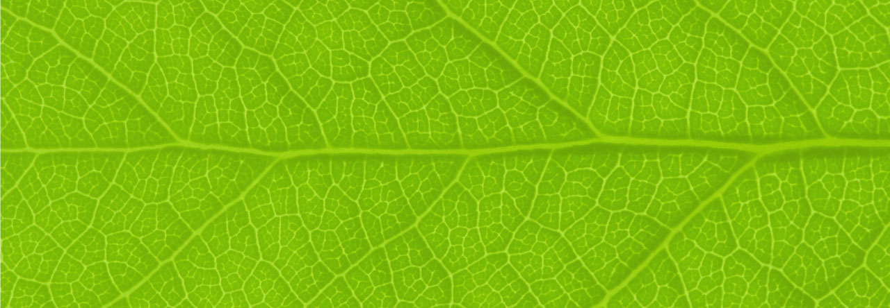 IQBusiness About-Leaf